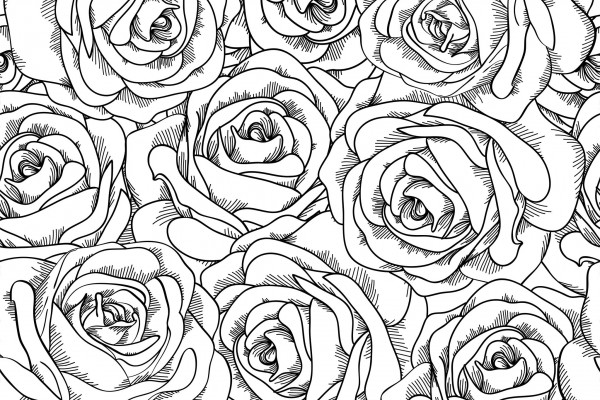Coloriage adulte roses - Coloriage rose ...